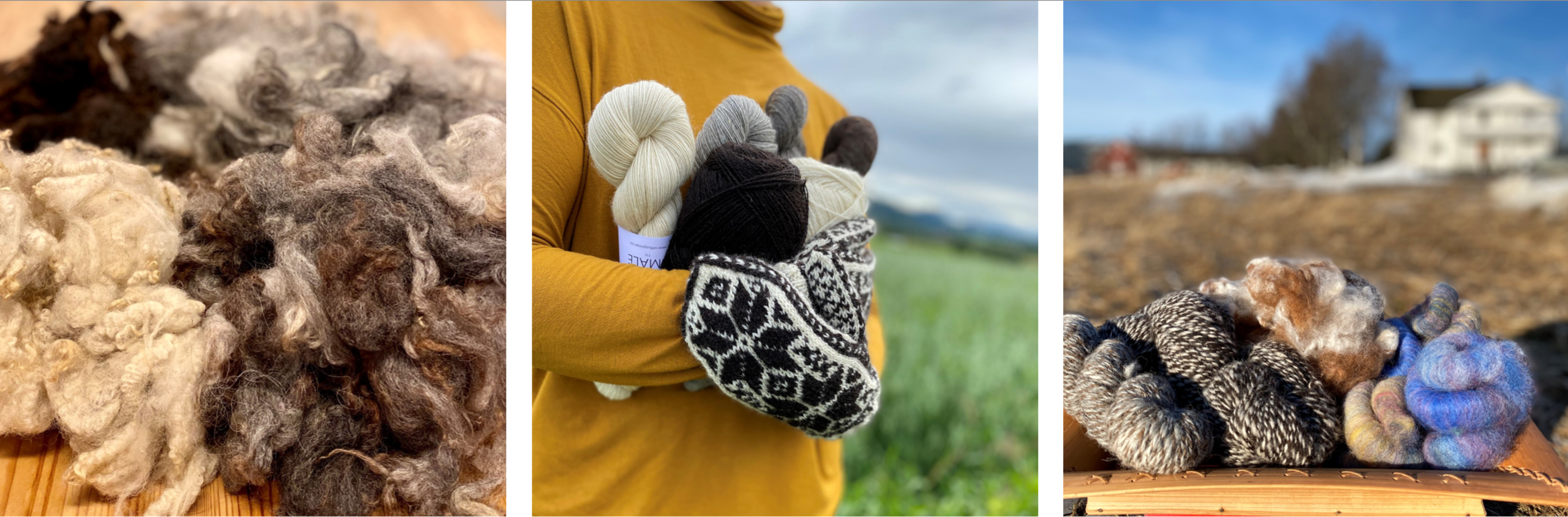 Wool, yarn and knitted product