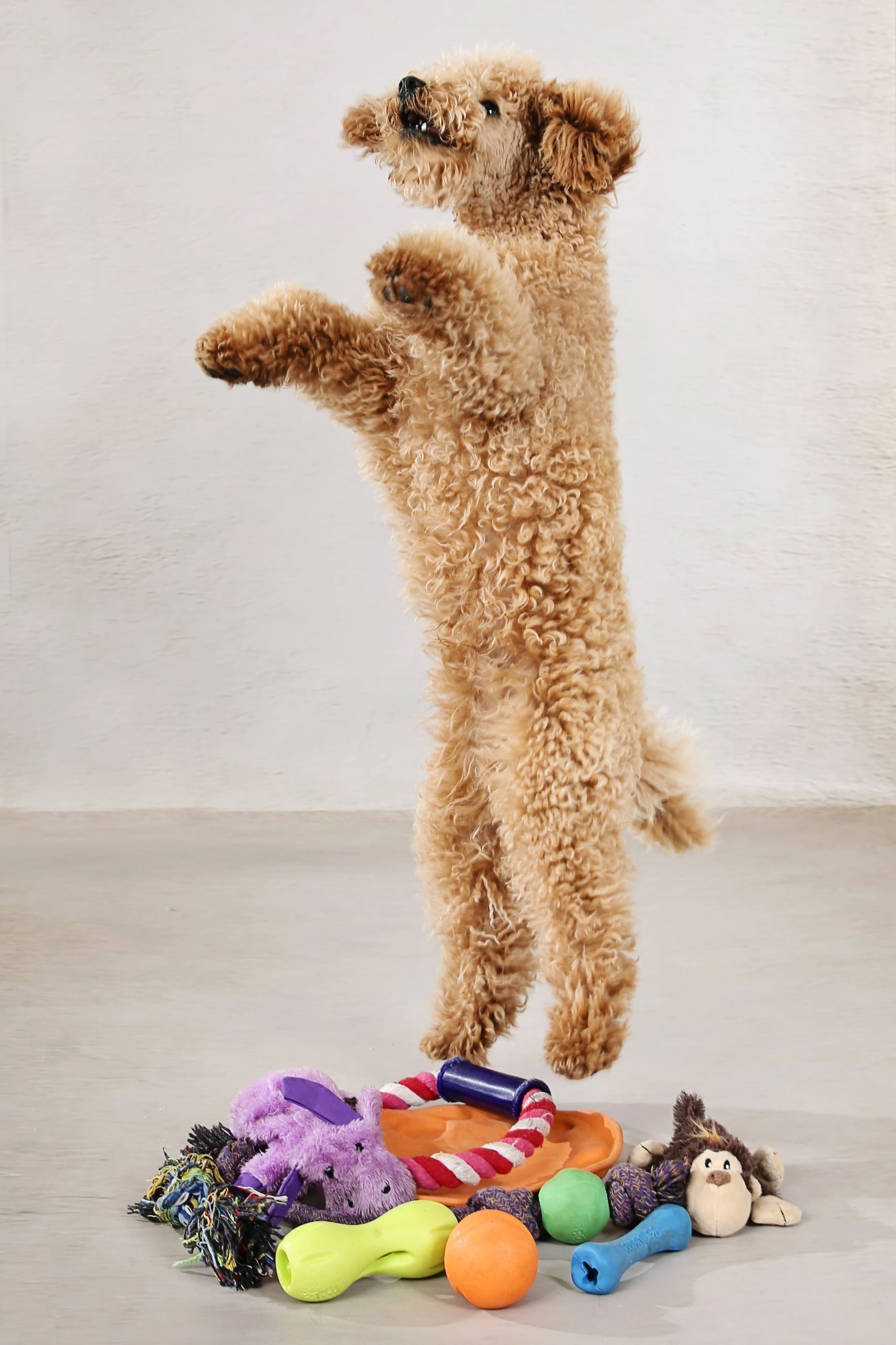 jumping puppy and eco toys with lifetime guarantee