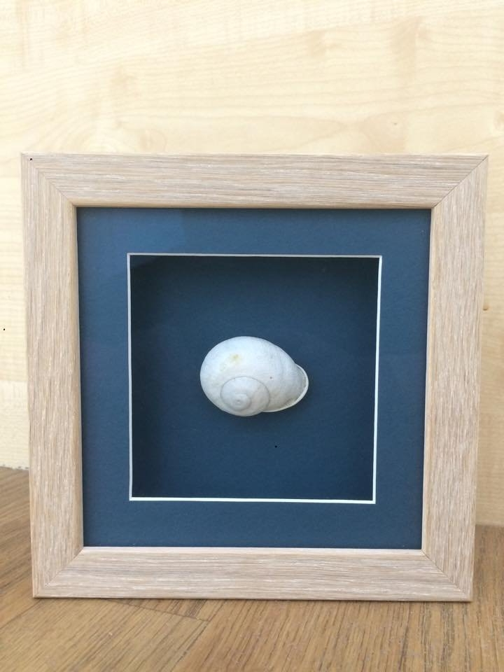 framed shell