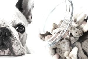 Pros and Cons of Starting a Dog Treat Bakery Business