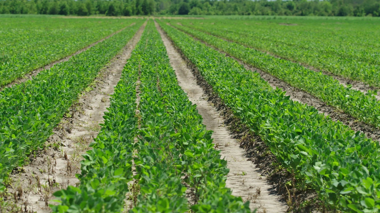 Soybean Stock Footage | Soybean aerial stock footage
