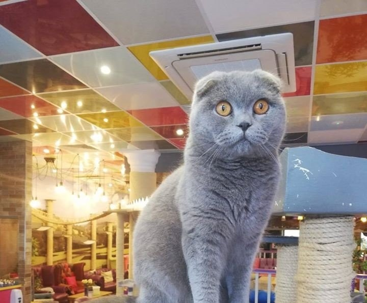 Kitty Cafe Raffle