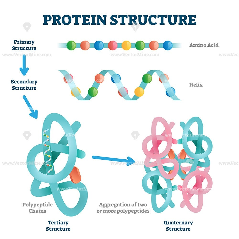 Protein structure vector illustration - VectorMine